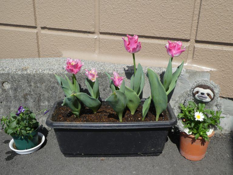 🌷 春ですね~イメージ