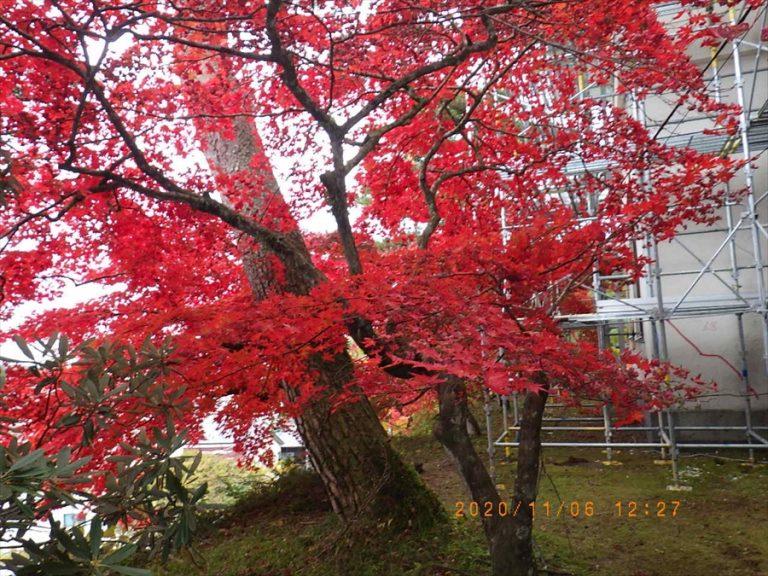日光の紅葉と足場イメージ